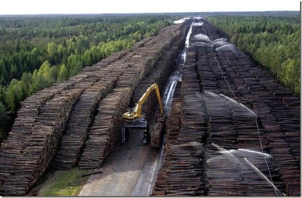 Sovet-Federatsii-predlagaet-uvelichit-masshtaby-kitajskih-rubok-lesa-v-Sibiri-i-na-Dalnem-Vostoke