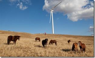 windfarming